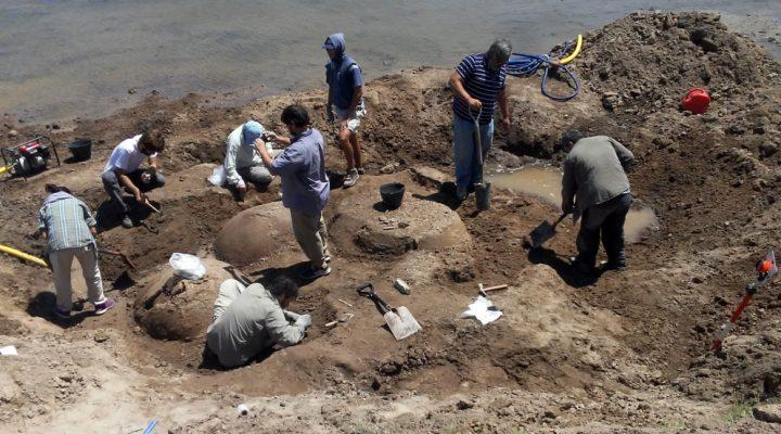 Descubren cuatro gliptodontes en la Provincia de Buenos Aires