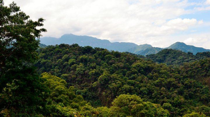 Bosques andinos como grandes sumideros de carbono