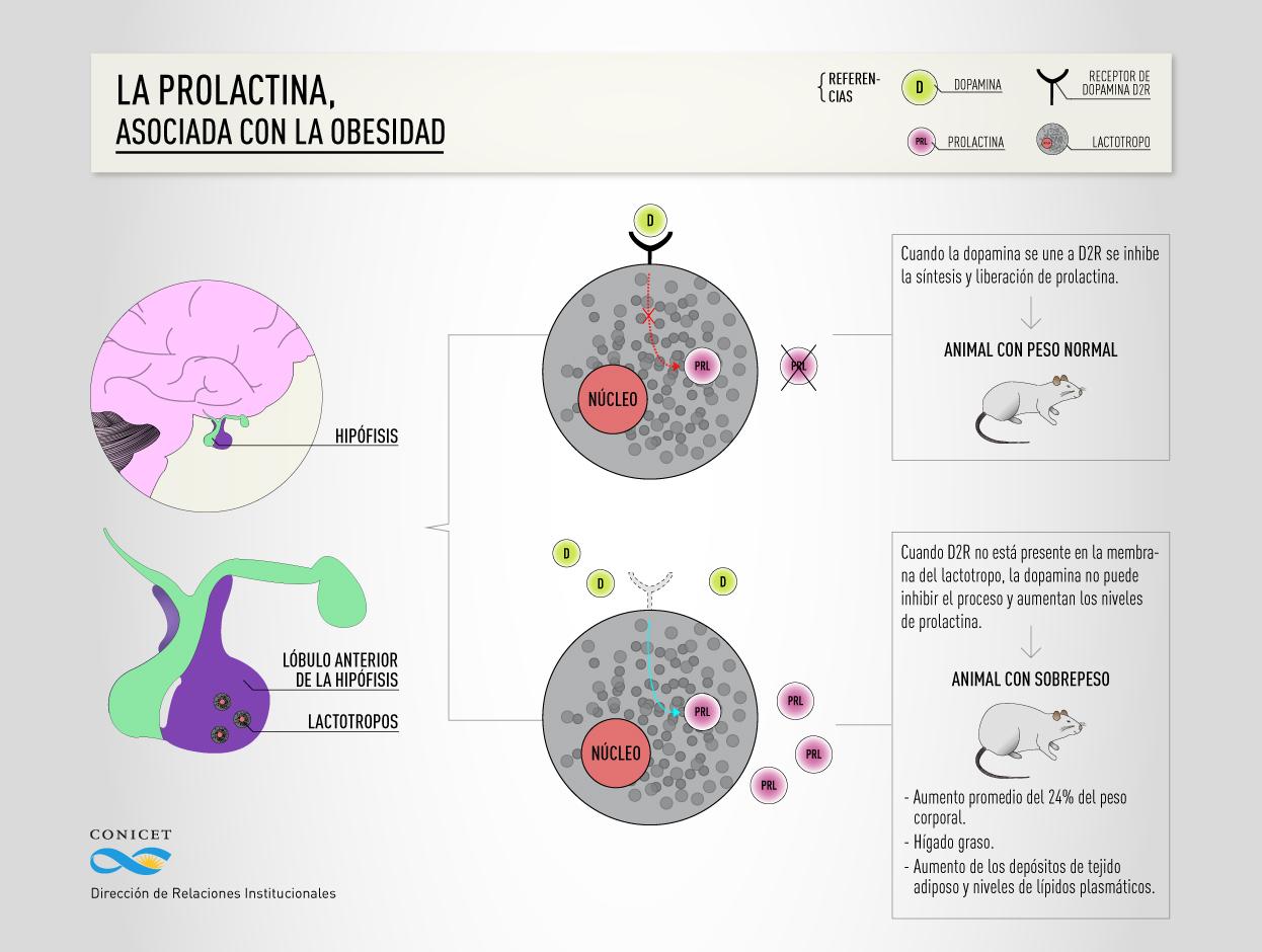 Niveles normales de prolactina en ninas