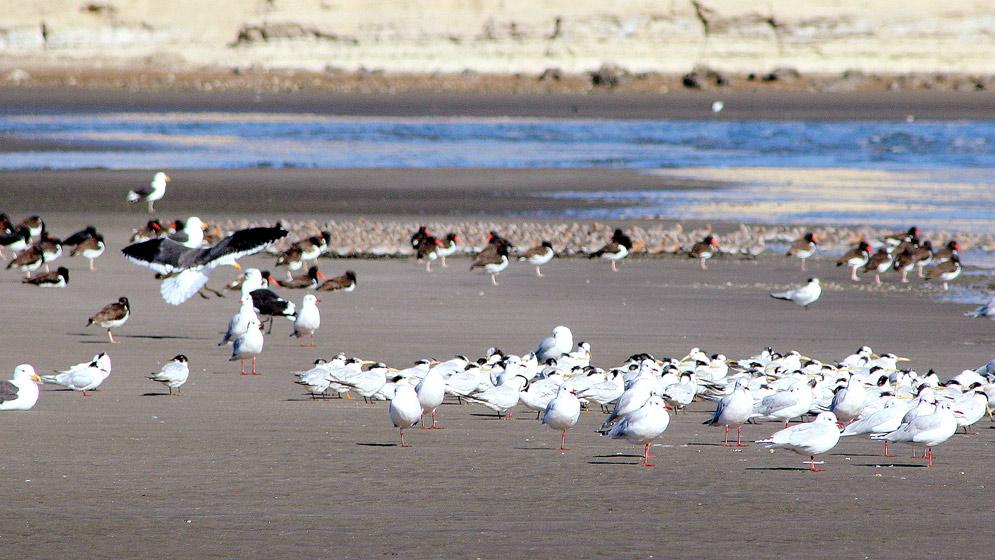 Ensamble de aves en Playa Colombo