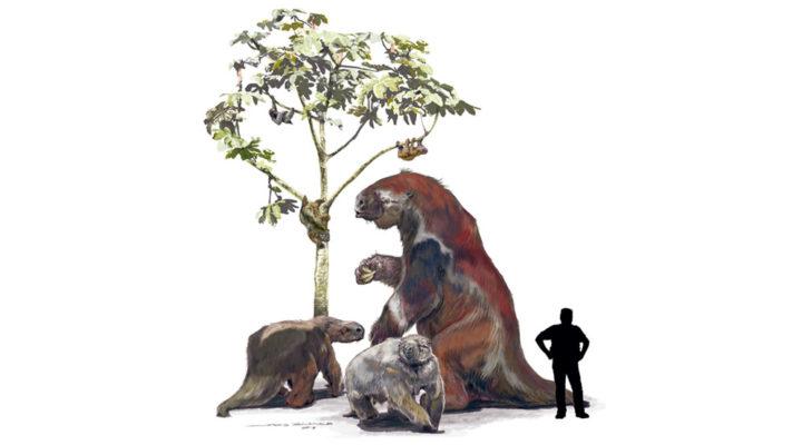 Los perezosos en el árbol: nuevos resultados de la paleoproteómica