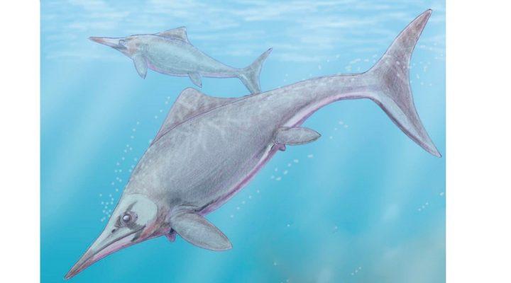 Hallan en la Patagonia un reptil marino de 150 millones de años que arroja pistas sobre su adaptación al medio acuático