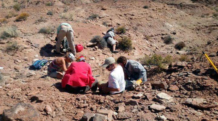Hallan restos fósiles de una nueva especie de tortuga de agua dulce