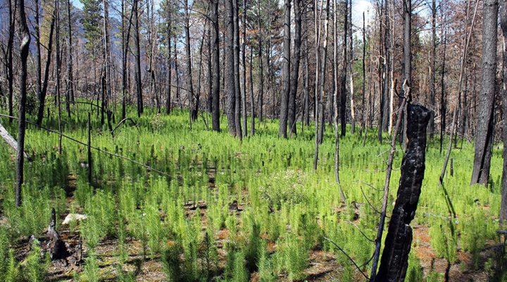 Incendios forestales: una investigadora del CONICET reflexiona sobre los focos de incendio