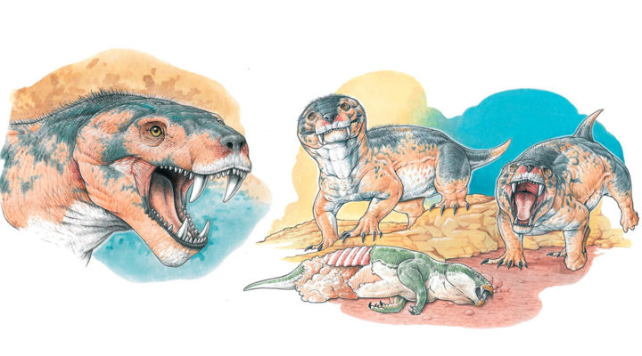 Vetusodon elikhulu: when the old has something modern