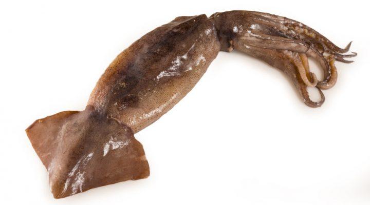 Ciencia para cuidar los recursos pesqueros: el calamar argentino