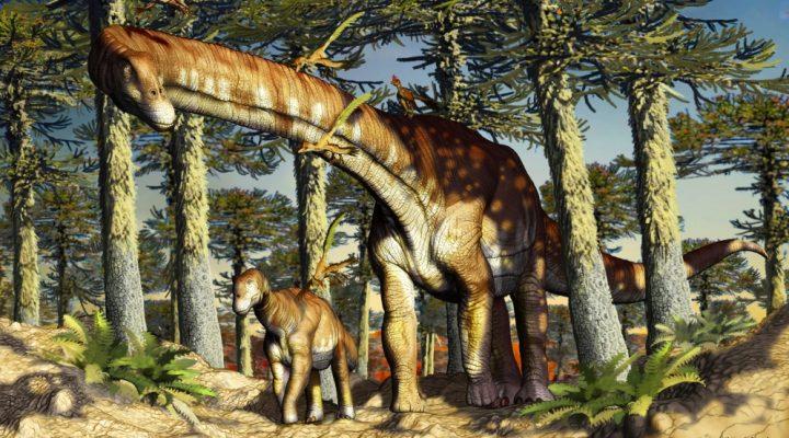 El hallazgo de un nuevo dinosaurio herbívoro de Patagonia allana el camino sobre el origen de los titanosaurios