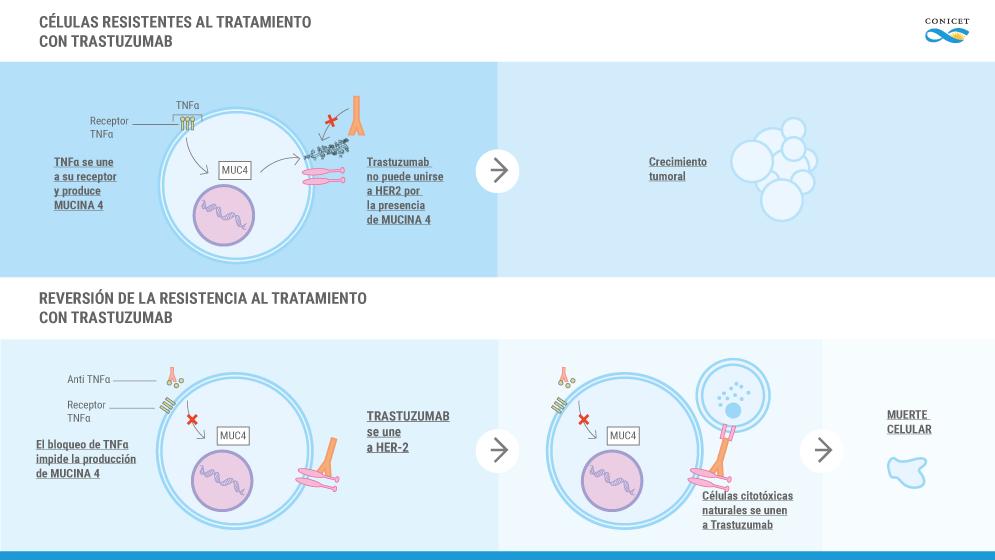 infografía.cancer.de_.mama_