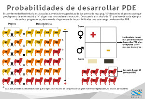 infografia_pug_compacto