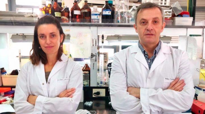 Con un test rápido, científicos logran detectar Coronavirus en muestras de pacientes positivos