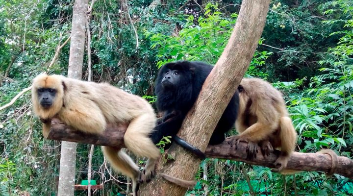 Scientists identify genetic cluster of illegally trafficked primates