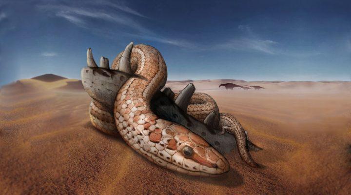 Despejan incógnitas sobre la evolución de las serpientes modernas con el hallazgo de un cráneo de 95 millones de años